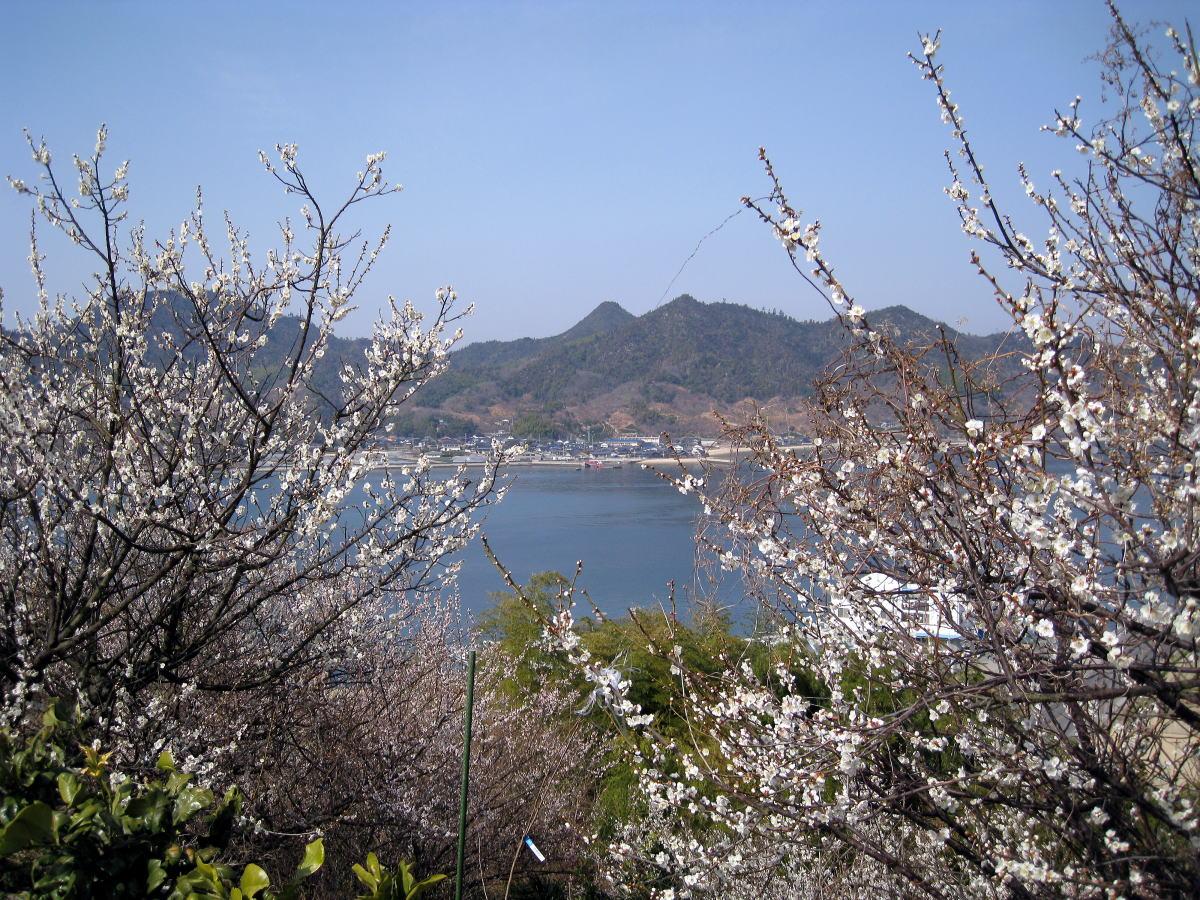 因島西海岸の春