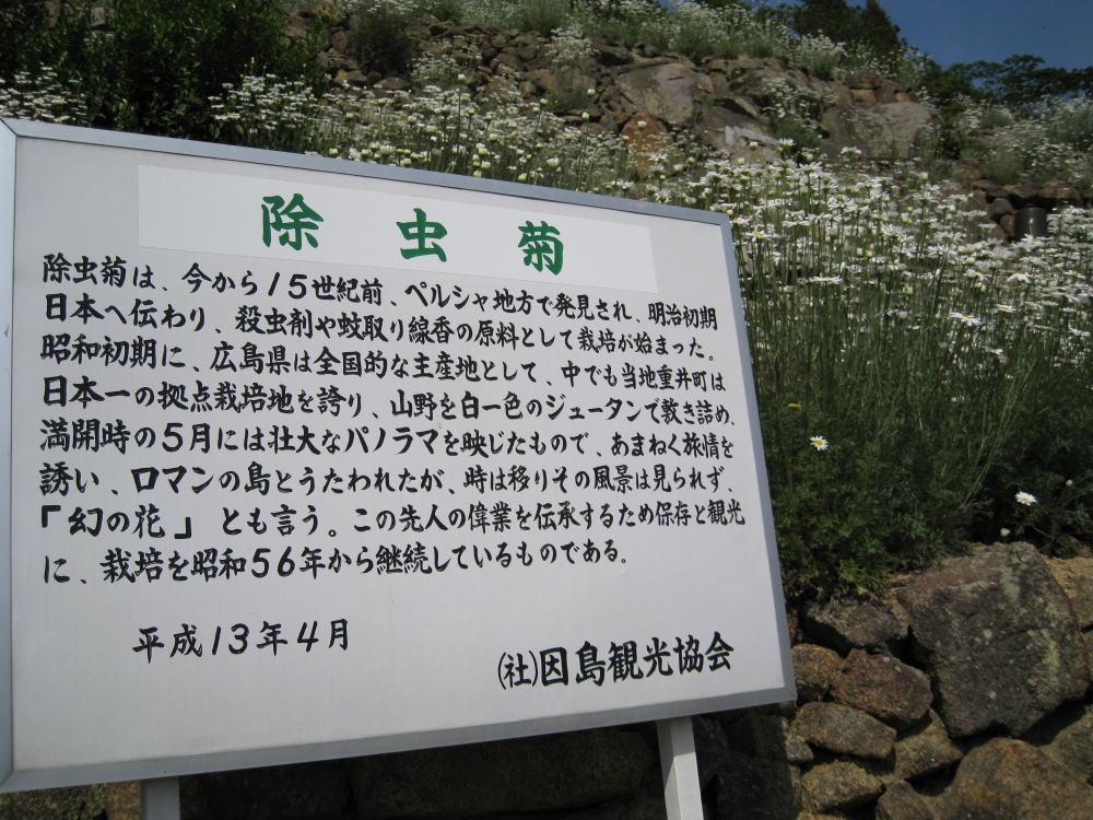除虫菊の紹介